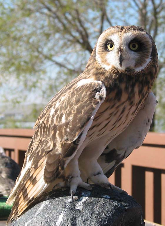 Beginning class introduces people to the area's avian residents