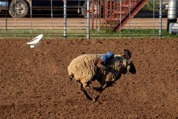 Saddle up, l'il buckaroos Mutton busting is just like bull riding, but with pint-sized competitors