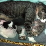 Carmen cuddles with her kittens in the library office.