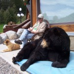 """Ben Mikaelsen at his Bozeman, Mont. home with his bear Buffy, an inspiration for his book """"Touching Spirit Bear."""""""