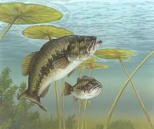 Dworshak Reservoir ranks high on Bassmaster Magazine's Top 100 best bass fishing spots