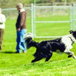 Dogs are free to play and roam at Pullman's new Pooch Park.
