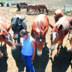 Bobbi Jo Chambers, alsong with her husband Barney and son Jack, raise mules at their Coyote Mule Co. near Cottonwood. They are staging the Mule Mania event on July 18-21 at Dayton, Wash.