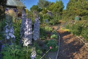 Delphiniums grow at the Living in the Garden venue, where the WSU Museum of Art will host their third annul benefit.