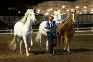 """David Lichman leads his horses, without a line and """"at liberty"""" in a stadium. Lichman, as well as Thirteen, Julio and Scotty, will perform at """"An Evening with Horses,"""" on Friday."""