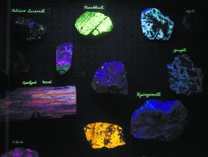 "Rock Hunter Discovers Unusual Glowing Florescent Rocks Called ""Yooperlites"" WSU-glow-Rock-Museum-300x227"