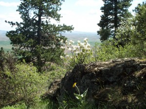 Near the top of Kamiak Butte, wildflowers stand out against the view of the surrounding Palouse country.