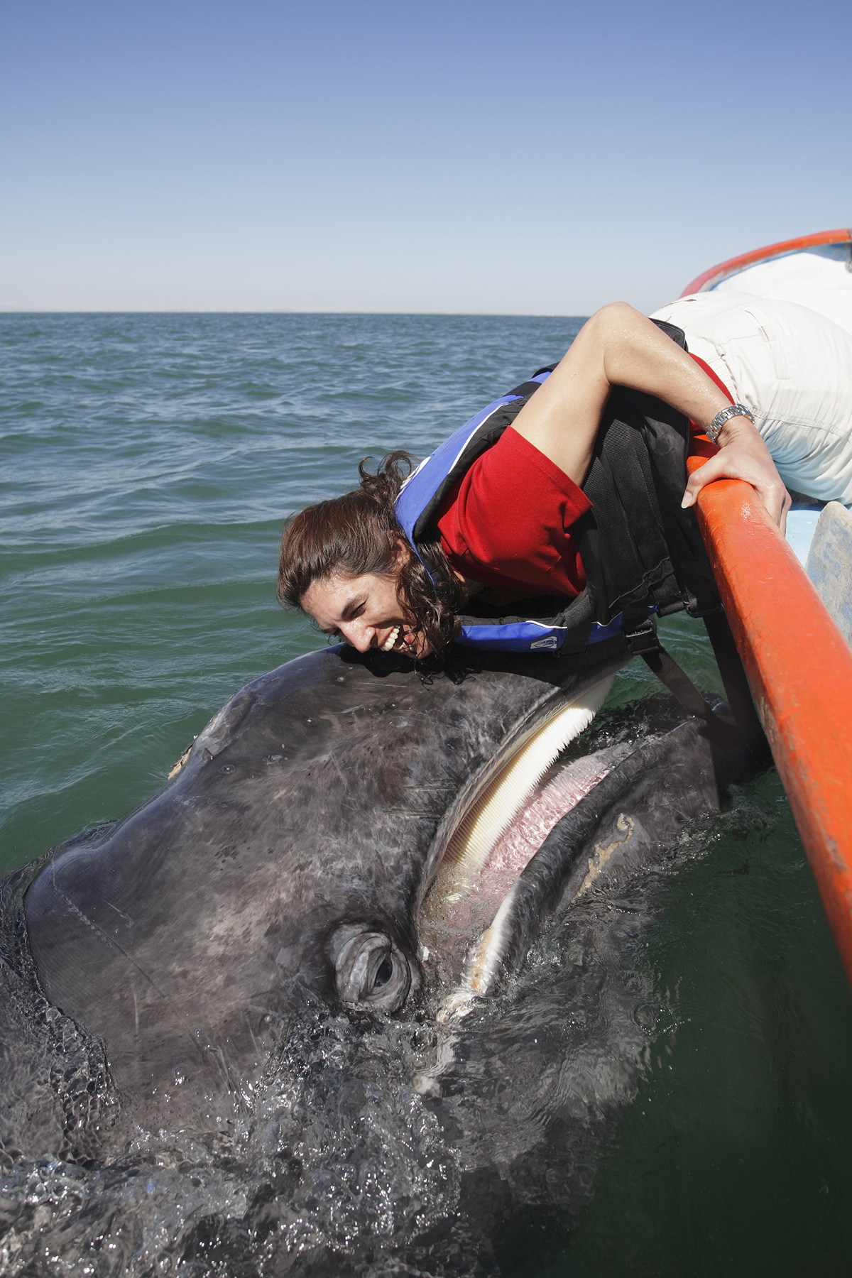 woman model released and friendly gray whale calf digital photo