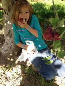 apples_Karah Schmidt would rather eat apples than pick them