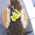 A Hot Dog hangs out at Pumpkin Palooza 2014 in Lewiston.