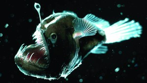 The angler fish is among the 90 percent of creatures that can produce it's own light.