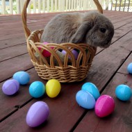 The truth about adopting Easter bunnies as pets