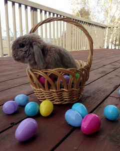 Pebbles the easter bunny