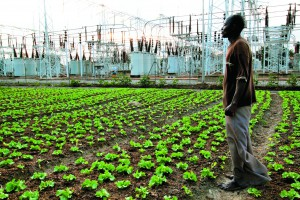 Bakari Fuseini has been farming in a plot of land in the Dzorwulu district of Accra in Ghana since the 1980s.
