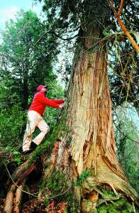360 tree climb