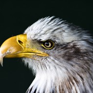 List This: 5 words even a bald eagle should know