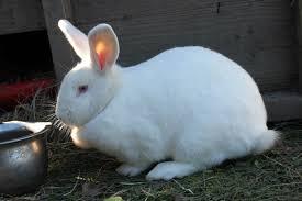 360_rabbit