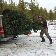 How to get a free — or nearly free — Christmas tree