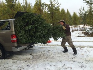 """From Christine Bradbury, USFS: """"We have 10 foot ceilings in our old house, which means I get to have a 9'11"""" Christmas tree, right? Like the Griswolds, we make cutting the annual Bradbury tree an annual event. Here's a photo of my poor hubby trying to stuff last year's tree into the truck."""""""