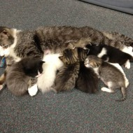 Clarkston's library cats gain some fame