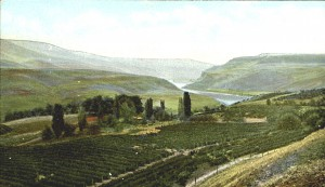 Schleicher Vineyard