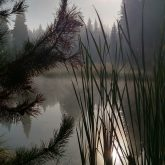 Early morning at the pond
