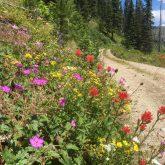 Summer Flora, Toboggan Ridge Rd., Clearwater National Forest