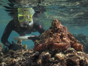 Sy Montgomery observes a Pacific Day Octopus on the South Pacific Island of Mo'orea. (Photo by David Scheel)