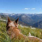 Small Dog, Big Mountains