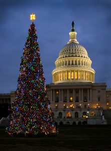 The 2013 Capitol Christmas Tree. The Capitol tree sits on the West Lawn between the White House and the Washington Monument.