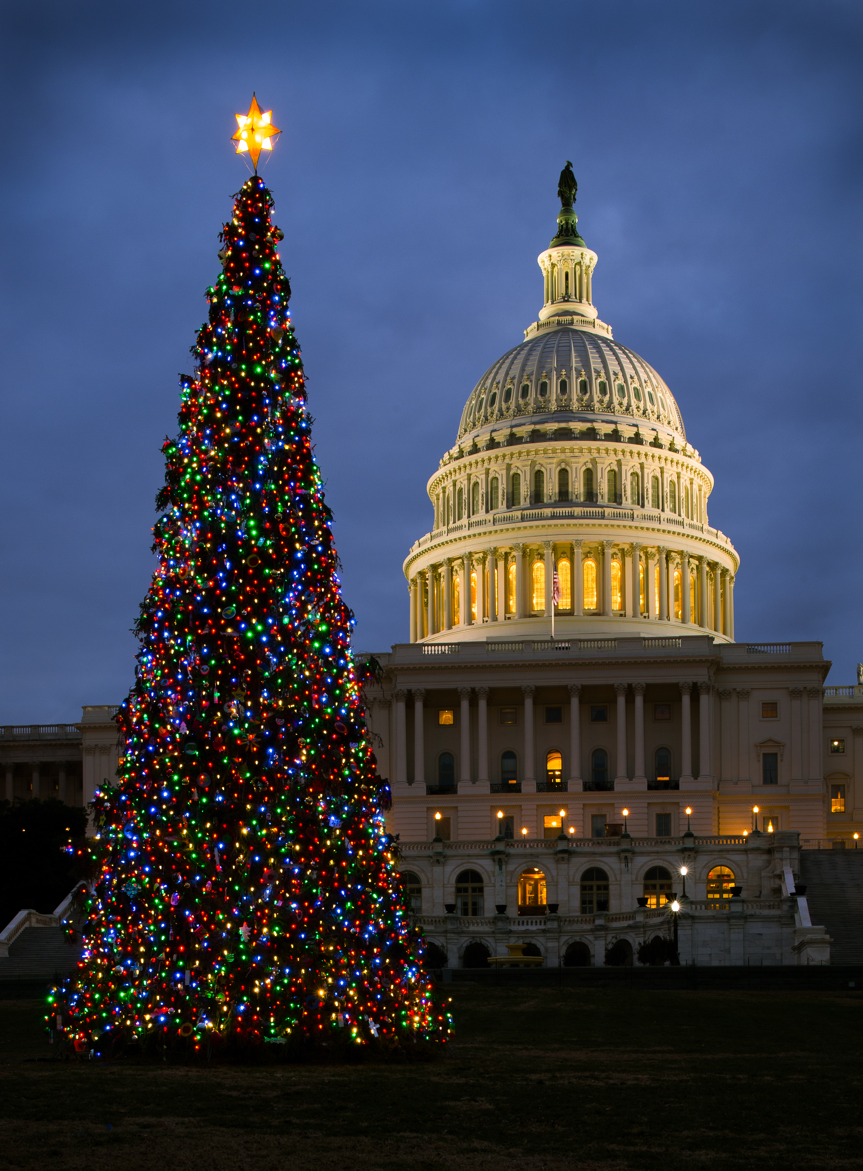 Ordinary Dc Christmas Tree Part - 5: The 2013 Capitol Christmas Tree. The Capitol Tree Sits On The West Lawn  Between The