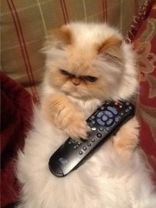 catwithremote