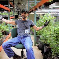 Master Grower, Steve Porter