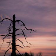 Beauty of a Dead Tree