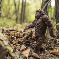 Finding Sasquatch: Award-winning author on methods to solve the mystery