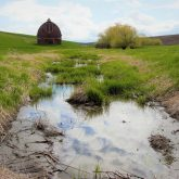 Country on the Palouse