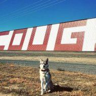 Husky is a Coug fan