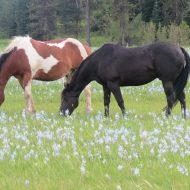 Lazy May Day Grazers