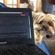 My lapdog competing with my laptop