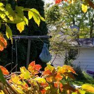 Autumn Clothesline