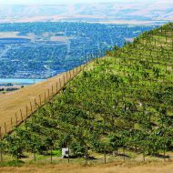 Grape Expectations: Spiral Rock Vineyard joins LC Valley's growing wine industry