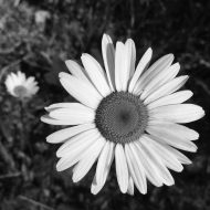 Deyo Daisy: When you let your daughter borrow your camera to go on a nature hike!