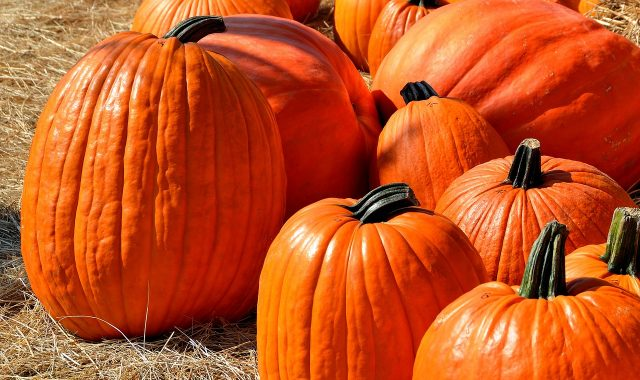 Guide to fall fun the weekend of Oct. 20-21