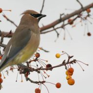Bird bonanza: join in Christmas Bird Count this weekend