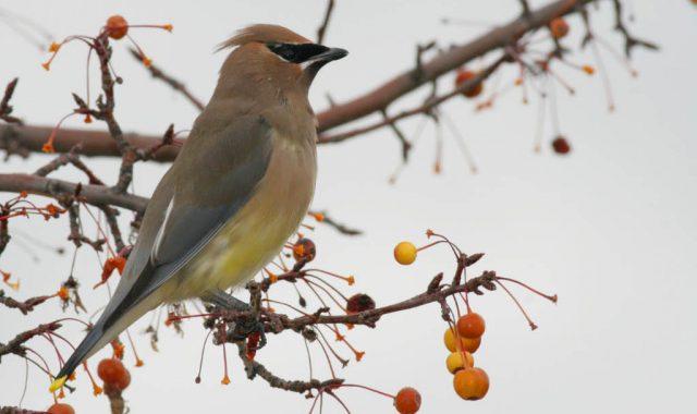 Bird bonanza: join in Christmas Bird Count this weekend
