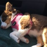 Pooped puppy!