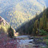 Larch Above Kelly Creek