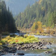 Fall Color on the North Fork Ranger District, Too
