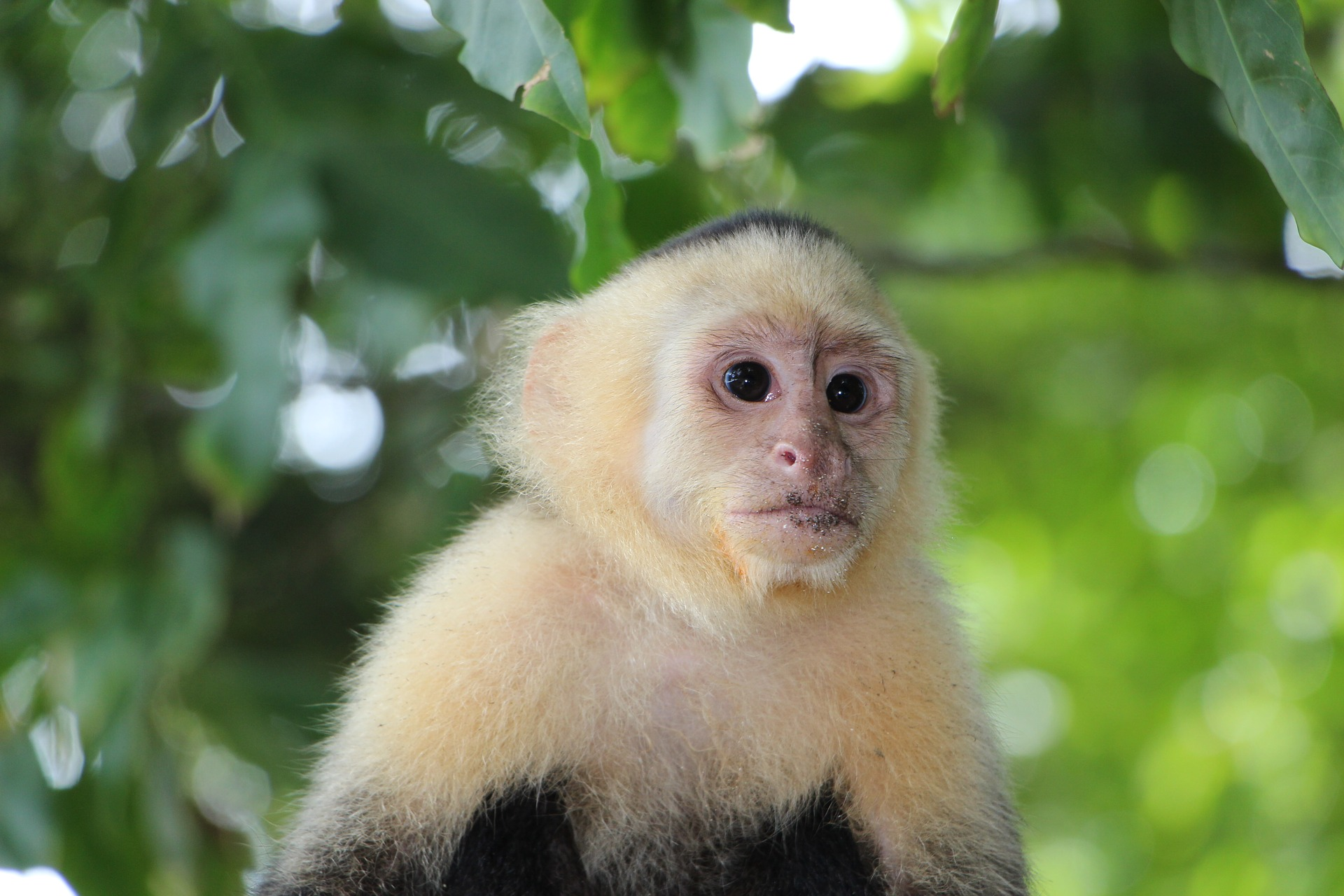 Getting Into Some Monkey Business Exotic Pet Store Offers Education And Opportunity Inland 360